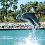 What It's REALLY Like To Swim With Dolphins